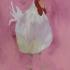 acr-pink-hen