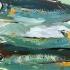 acr-whitefish-3