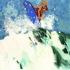 acsurfer3