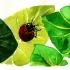 wcweb_abc_ladybug2