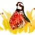 wcweb_hiding_quail