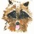wcweb_raccoon_face