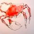 wcweb_red_crab