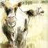 wcweb_up_and_down_cows